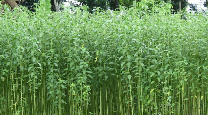 How jute help to sustain environment